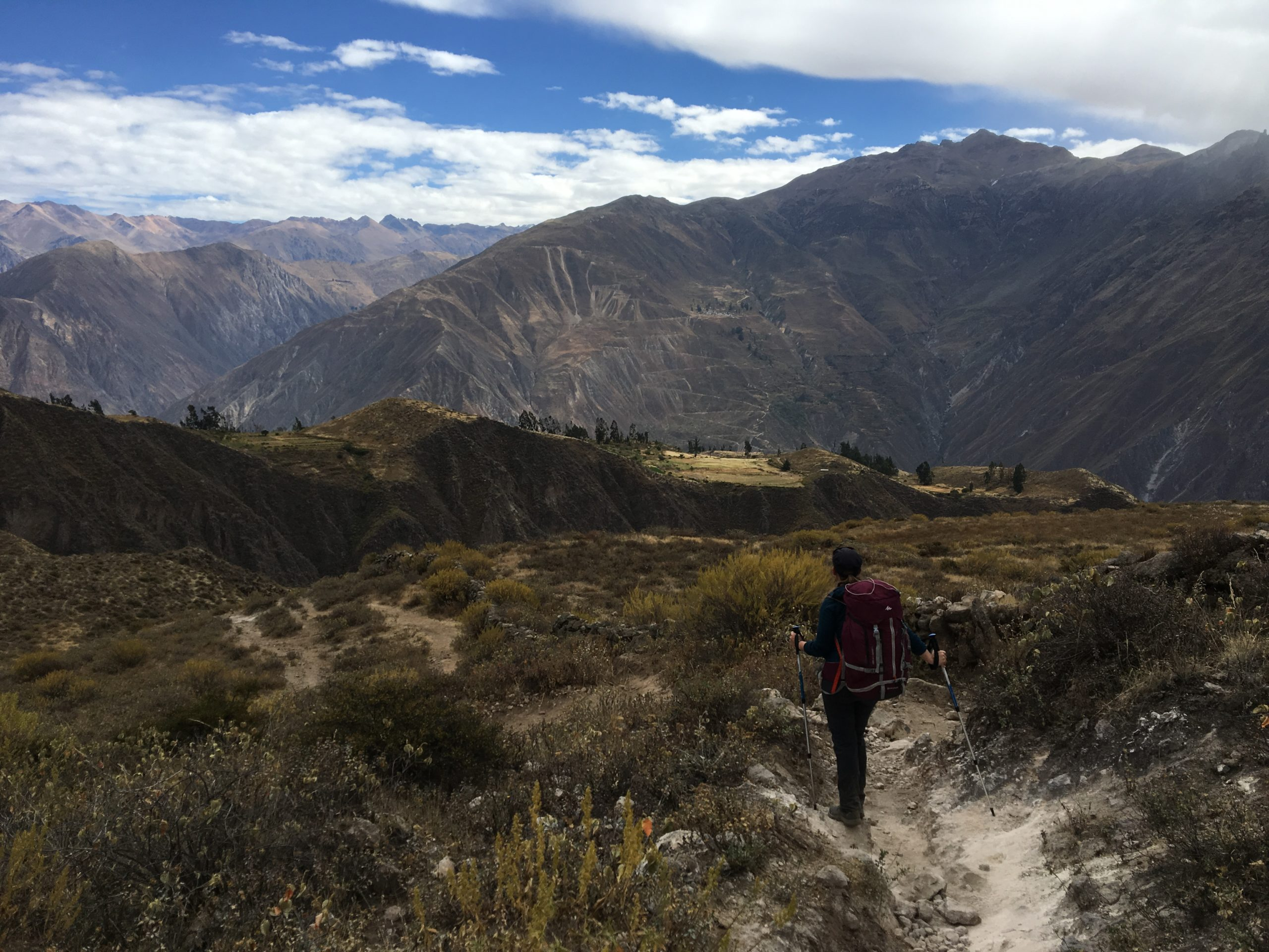 Admiration au canyon de Colca